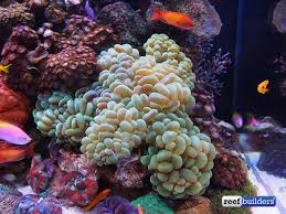 Saltwater Aquascaping The Beautiful Entries Of This Year U0027s Aquarama Reef Aquascaping