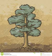 Oak Tree Drawing Oak Tree Sketch Stock Image Image 35700331