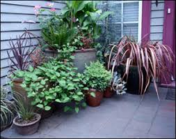 Container Gardening For Food - container gardening gardening solutions university of florida