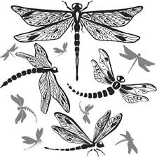 what does a dragonfly symbolize you d be stunned to