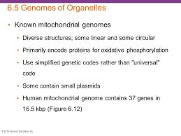i investigating genomes ppt video online download