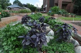 Botanical Garden Chapel Hill by Edible Campus Unc