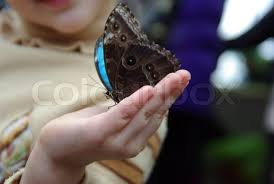 beautiful butterfly on child finger stock photo colourbox