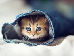 beautiful kittens the 25 photos of the most beautiful kitten in the world