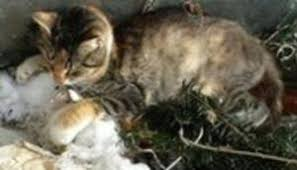 young cat frozen death snow sends harsh message