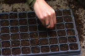 planting seed trays for your winter garden youtube