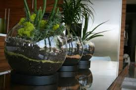 indoor garden terrarium 28 images 25 best ideas about