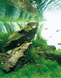 Takashi Amano Aquascaping Techniques Bonsai Artificiel Page 2 Chill Pinterest Aquariums Fish