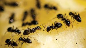How To Kill Ants In The Kitchen by How To Get Rid Of Bugs In Your House Ortho