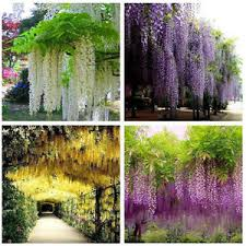 Wedding Arches Ebay Winter Strings Silk Wisteria Flowers Wedding Arch Gazebo
