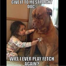 Dog Doctor Meme - the top 100 dog memes of 2017 pro pooch
