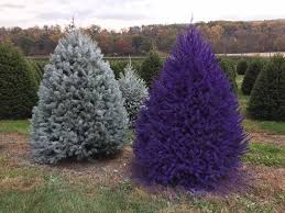 purple christmas tree omg you can get real purple pink christmas trees at this tree