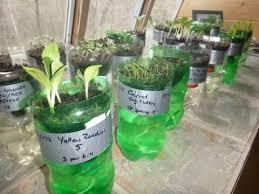 Diy Self Watering Herb Garden How To Make Self Watering Seed Starter Diy Youtube