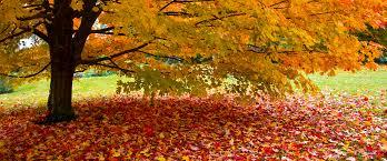 Lawn And Landscape by Seasonal Cleanup Spring U0026 Fall Leaf Cleanup Berkley Dighton