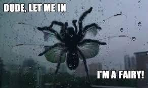 Spider Meme - image 21 let me in i m a fairy spider meme jpg play wild wiki