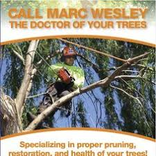 m s wesley tree service tree service chico ca projects