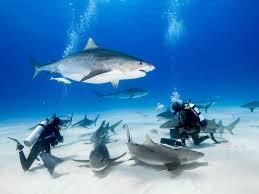 the 25 best scuba diving certification ideas on pinterest scuba