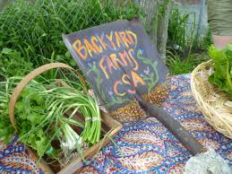 backyard farms csa a collaboration of front step farm and