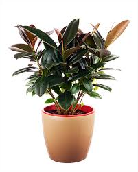 best 10 air purifying plants with nasa ratings top 10 plants