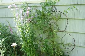 diy barbed wire trellis a mountain hearth