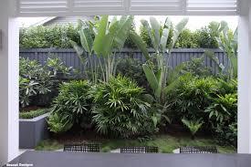 Tropical Plants Perth 8 100 Plants Strelitzia Nicolai Giant Bird Of Paradise Tropical