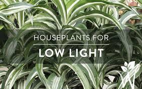 low light indoor plants indoor plants for low light westwood gardens blog
