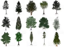 set or collection of common trees 3d render stock photo 483803474