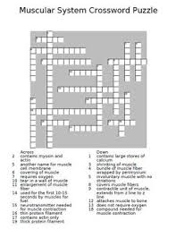 muscular system crossword puzzle by the teacher team tpt