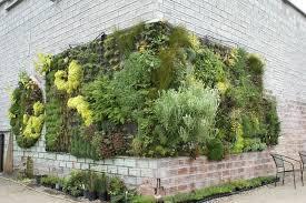 cura giardino cura e manutenzione giardino verticale muri verticali