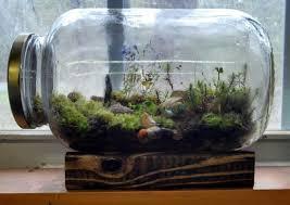 24 best terraruims images on pinterest terrarium terrariums and