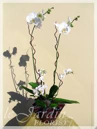 Orchid Flower Arrangements Orchid Plants Dial A Flower At 561 627 8118