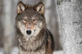 the big bad wolf listen to our q3 economic review webinar umb
