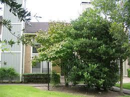 Houses For Rent In Houston Tx 77074 8433 Wednesbury Lane Houston Tx 77074 Hotpads