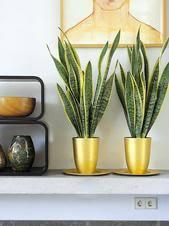 grünpflanzen im schlafzimmer zimmerpflanzen den perfekten standort finden berlin de