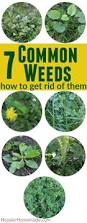 How To Get Rid Of A Beehive In Your Backyard 811 Best Home Garden Ideas Images On Pinterest Growing