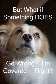 Pet Insurance Meme - insurance meme