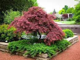 plants for a japanese garden the tree center