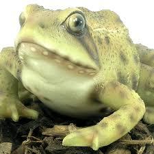 frog resin garden ornament 7 59 garden4less uk shop