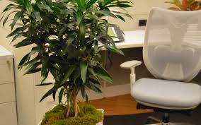 the workplace collection discover office plant rentals