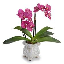Orchid Cut Flowers - new growth designs fuchsia double faux phalaenopsis orchid in pot