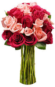 bouquet of roses benchmark bouquets 2 dozen blushing beauty roses no