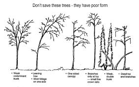 do not save weak trees tree preservation landscape plants