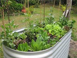 raised garden beds u2013 pros and cons earthwise gardening