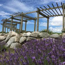 When Is Lavender In Season In Michigan by Cherry Point Farm U0026 Market Lavender Labyrinth Shelby Michigan