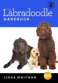 labradoodle hairstyles how to groom a labradoodle tips on grooming labradoodle