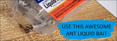 Natural Ant Killer For Kitchen by 5 Effective Ways To Naturally Get Rid Of Ants