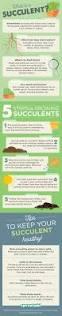 best 25 flowering succulents ideas on pinterest succulents