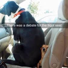 Dog In Car Meme - top 12 funny memes of dog s in cars tail threads
