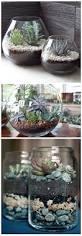 succulent gardens for small spaces dengarden