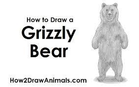 draw bear grizzly